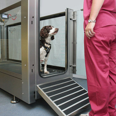 Tapis Roulant Veterinaire Immerge Pour Chien Hydro Physio Series