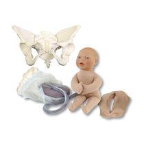 Simulateur d'accouchement / féminin / pelvis