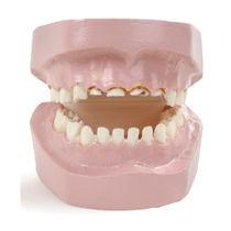 Modèle anatomique de dentition / de formation / de pathologie / de bébé