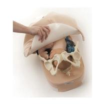 Simulateur de palpation / de grossesse