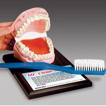 Modèle anatomique de dentition / d'enseignement / pour hygiène dentaire