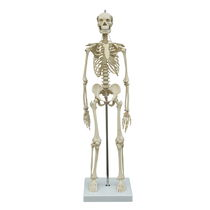 Modèle anatomique corps entier / de squelette / d'enseignement / miniature