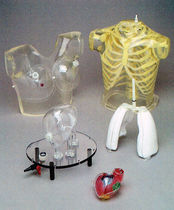 Fantôme de test pour imagerie nucléaire / poumon / thorax / coeur