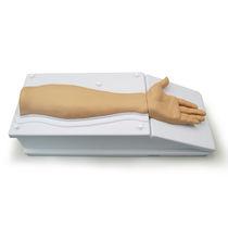 Simulateur de dissection / d'anatomie / bras