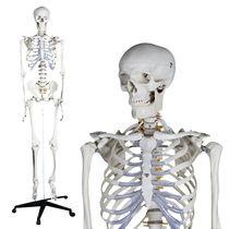Modèle anatomique de squelette / d'enseignement / articulé