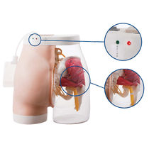 Modèle anatomique de fesse / pour injections intramusculaires / semi-transparent