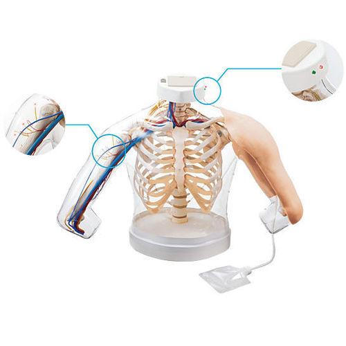 simulateur pour injections intramusculaires / torse