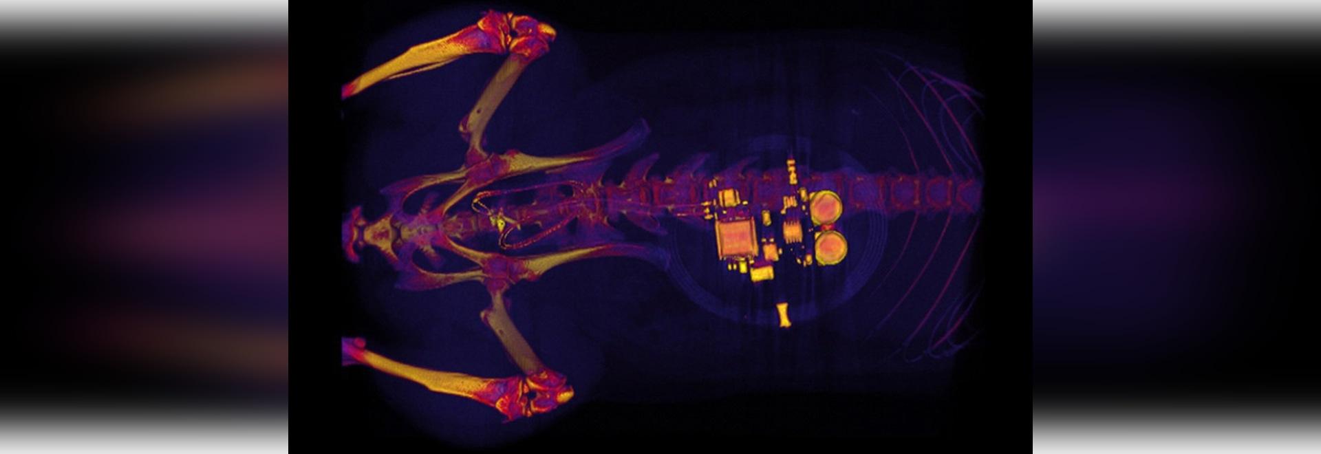 L'implant commande la vessie trop active utilisant des lumières de LED