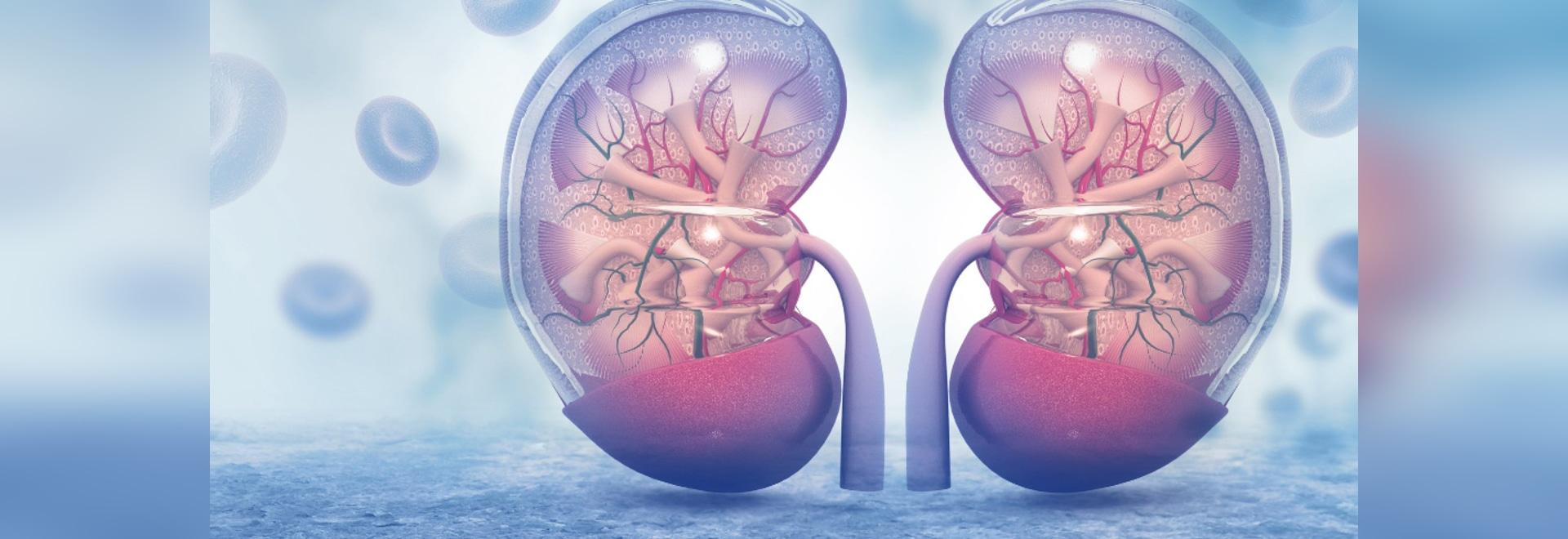 Maladie rénale vulnérable à la thérapie nanoe visée