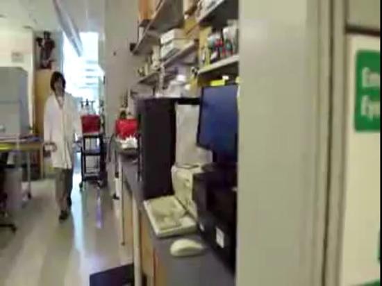 Le matériel de bioscaffold d'université de riz dégrade pendant que l'os devient le remplacent