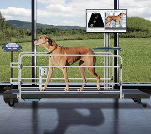 système d'évaluation démarche / vétérinaire