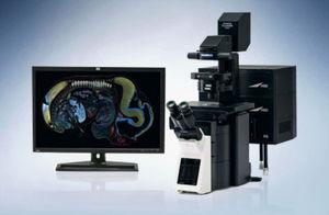 microscope confocal à balayage laser