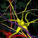 logiciel d'analyse / de visualisation 3D / de mesure / avec système de suivi
