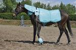 unité de magnétothérapie vétérinaire / pour animaux de compagnie / pour équidés / pour chameaux