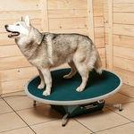 plateau d'équilibre rond / vétérinaire