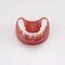 modèle anatomique de dentitionPE-PRO020Nissin Dental Products Inc.