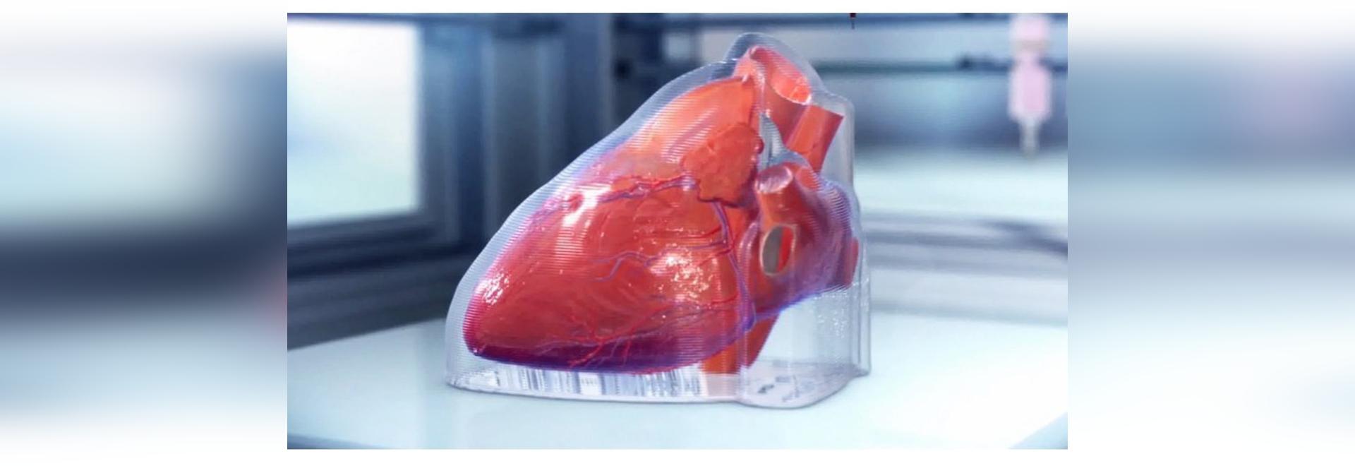 une société de biotechnologie basée à Chicago a imprimé en 3D un coeur humain miniature
